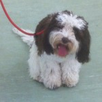 Finally, Dottie is learning something useful at a puppy class!