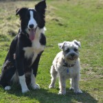 Brian was patient with Marley & allowed him to take his time…